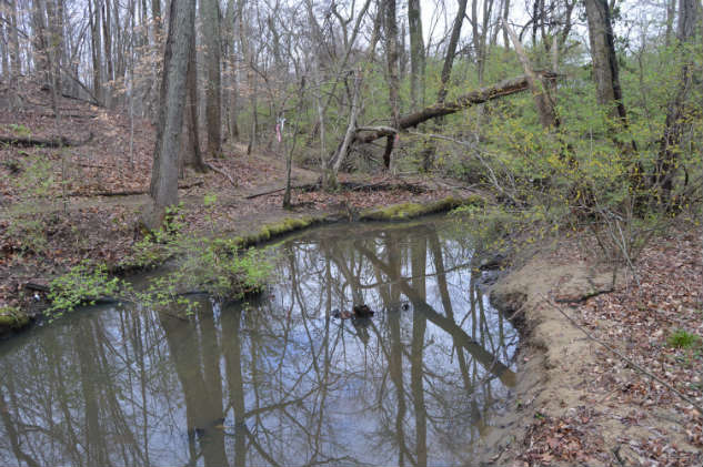 This quiet patch of woods and stream are next to the well-traveled Bay Ridge Avenue. Photos by Lisa Borre/ Back Creek Conservancy