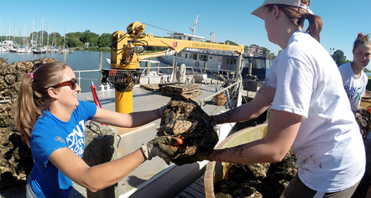Volunteers oyster planting with CBF