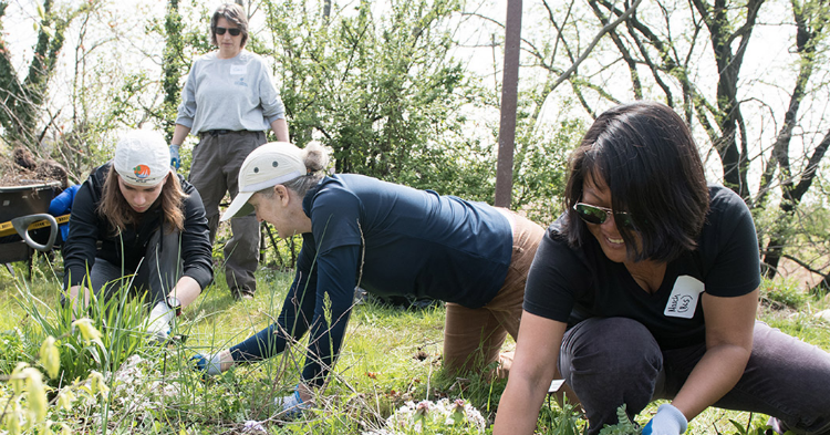 Volunteers planting grass at Ft. McHenry