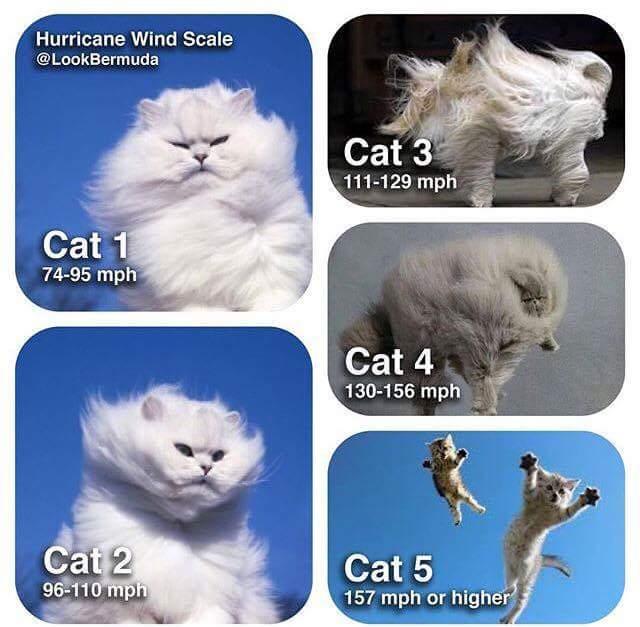 Cat 5 Irma