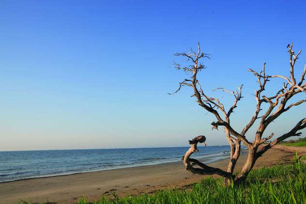Grandview Nature Preserve. Photo courtesy of Hampton CVM