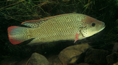 2013 39 s most sustainable fish to eat spinsheet for List of fish to eat